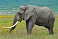 Serengeti_114bc