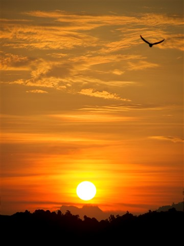 2012-02-13 PS Malaysia Lumut Seagull Bird Sunset CS