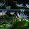 Lilies and Lotus