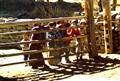 looking-across-barriers
