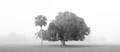Palm and Oak in Fog