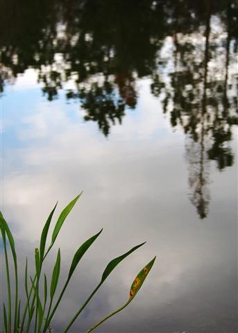 Reflection - MRW50346