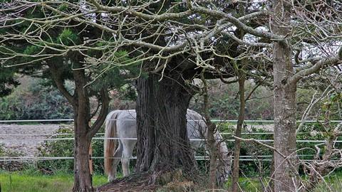 half-hidden horse