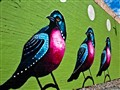 birdwall-9015845