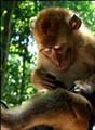monkey3102