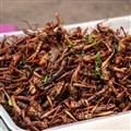 Grasshoppers delicious