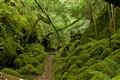 Rennadinna Yew Wood