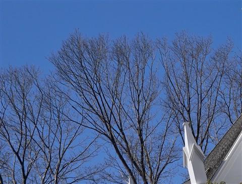 left trees-1