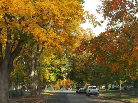 autumn_streets_9