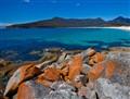 Lichen turning rocks orange, Coles Bay Tasmania