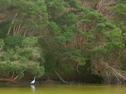 Heron Hideaway  ©2010 Derek Dean