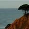 Cliff diving tree (Algarve, Portugal)