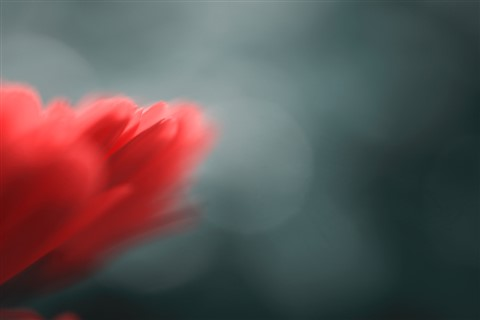 Petals Abstract v2