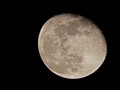 Moon Portrait