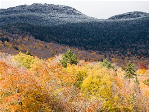 Autumn-Foliage-1