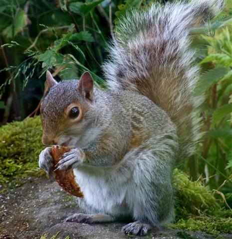 Sqirrey the squirrel noshing