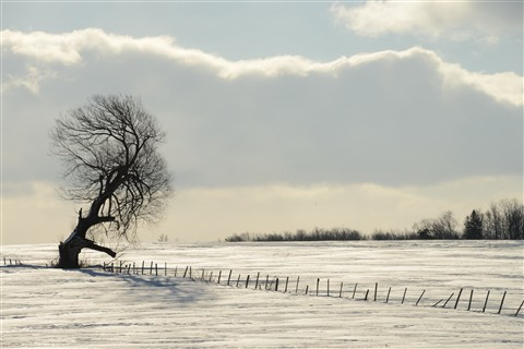 DSC_7092 - Winter Solitude