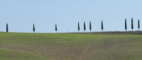 Cipressi in fila