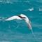Bermuda_birds_2011