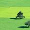 Djelic zelene doline