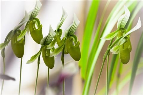 orchids_1301178531