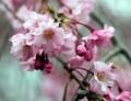 Budding Flowers in Nomahegan Park in Cranford NJ