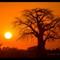 baobab_sunrise
