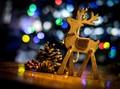Reindeer & Lights