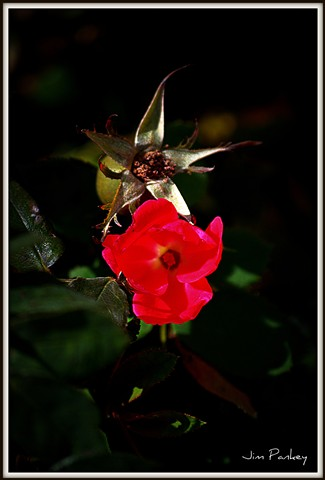 pretty red flower