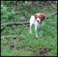 Puppy Joy in the mountain meadow