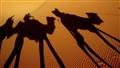 Sahara Shadows..