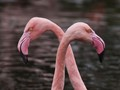F is for Flamingos