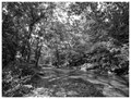 Black and white photo of Middle Creek in Maryland during spring.