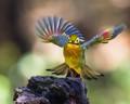 Colorful Dancing