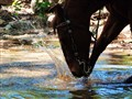 Horse Splashing