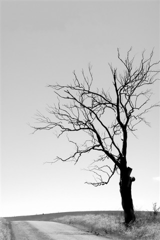 dead tree_mudgee nsw australia