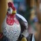 chicken bokeh