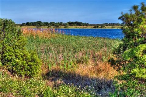 Viera Wetlands Fresh Water Habitat