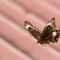 20200308 Butterfly LIA_3266