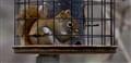 Squirrel in bird feeder