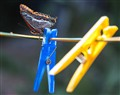 Clothesline with butterfly