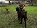 Follow That Goat!