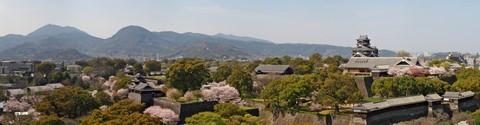 熊本城桜02pano