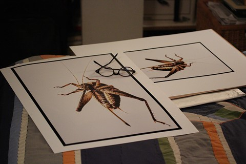 Cricket Prints