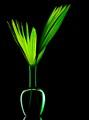 Foliage / Vase