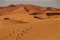 Saharan Sands