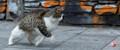 Dribbling_stray_cat!