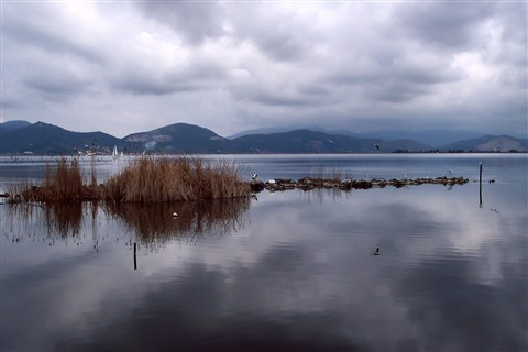 Lake of Massaciuccoli