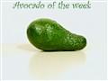Avocado of the week