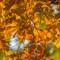 Autumn Magnificence    10 08 2015    007